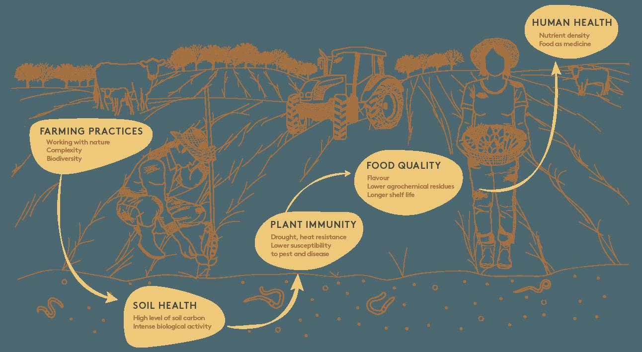 Illustration of Regenerative Agriculture